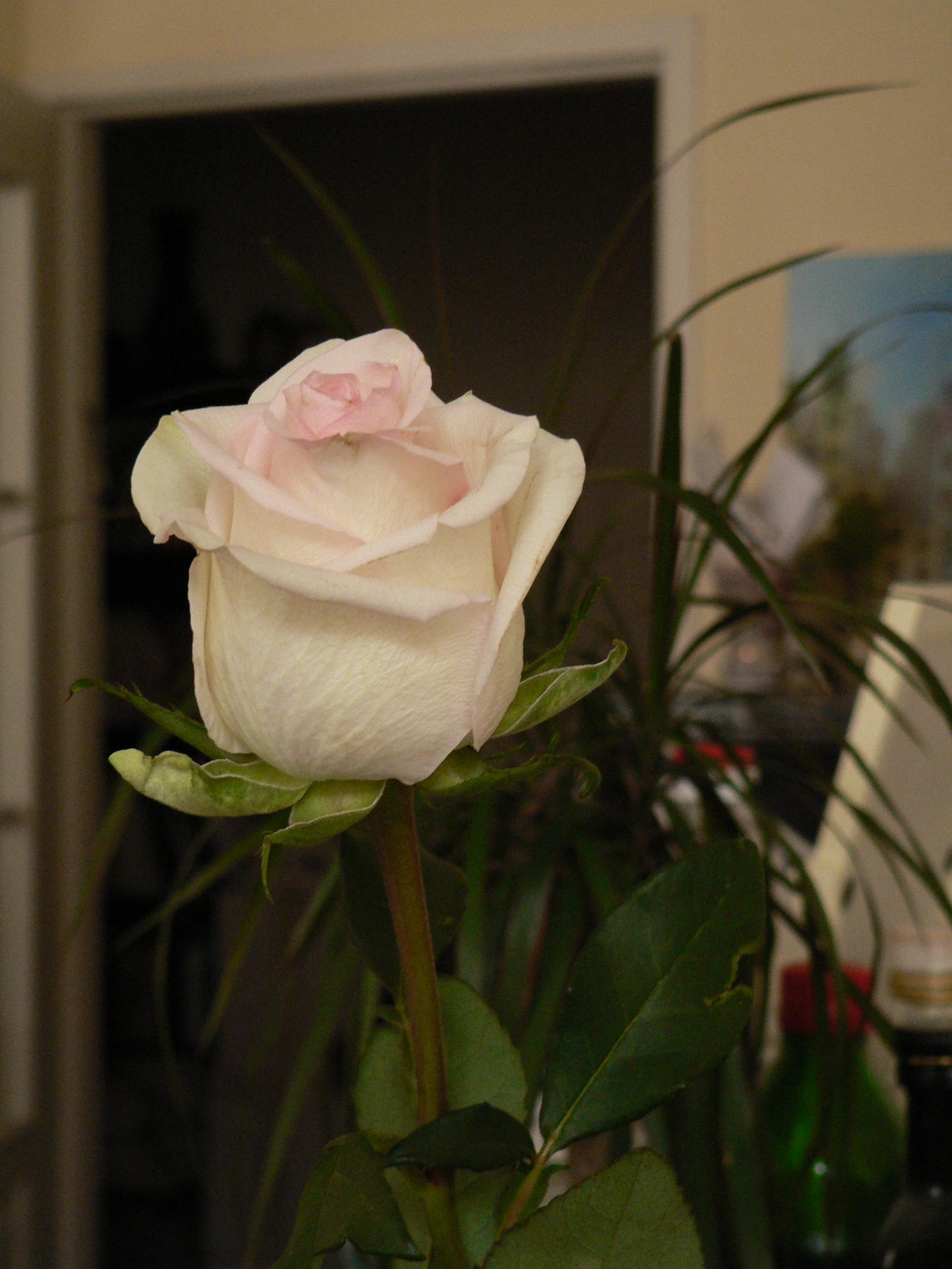 Fleur de Chachou